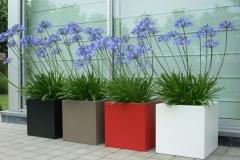 foto's 4 polyester plantenbakken met agapanthus (groot)003