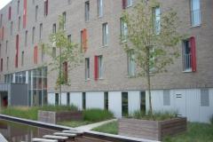 hardhout boombakken + haagbakken op maat (project te Brugge) 001 (groot)